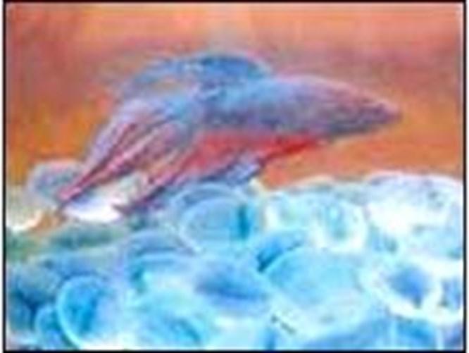 Yangından kurtulan kahraman balık